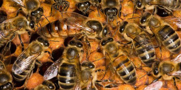 queenbee on honeycomb