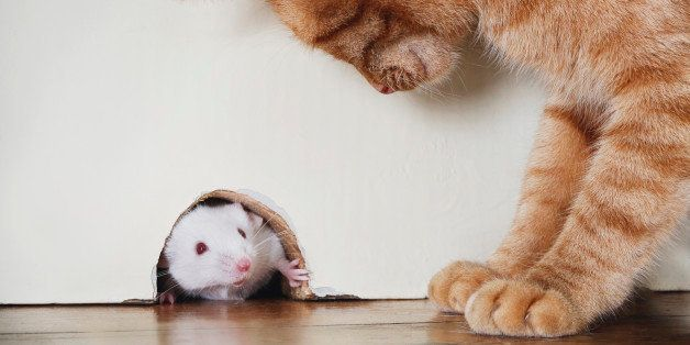 Cat standing over mouse peeking out of mouse hole