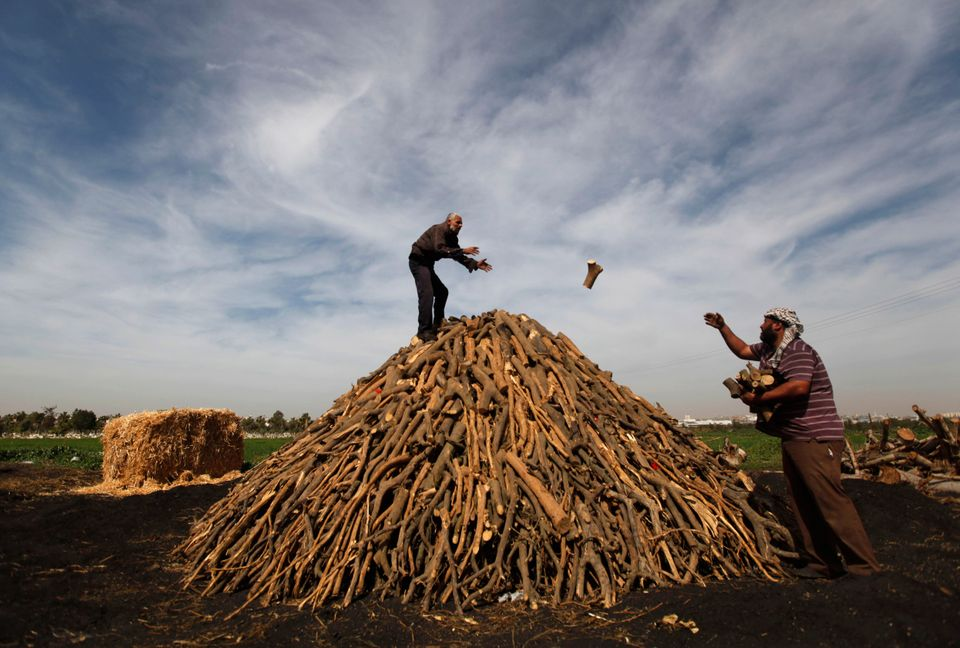 In this Monday, Feb. 25, 2013 photo, Palestinian workers collect wood to be burned and turned into coal at one of the few loc
