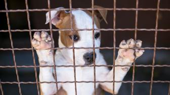Sad Young puppy in shelter waiting for new owner