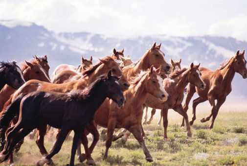 Dreams About Horses: Dream Meanings Explained | HuffPost Life