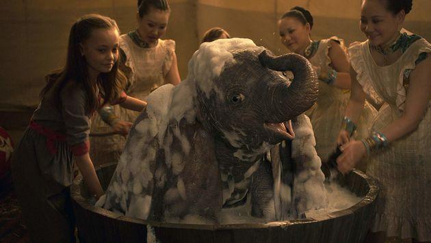 Dumbo ganha banho sem champanhe, porque hoje em dia não pega