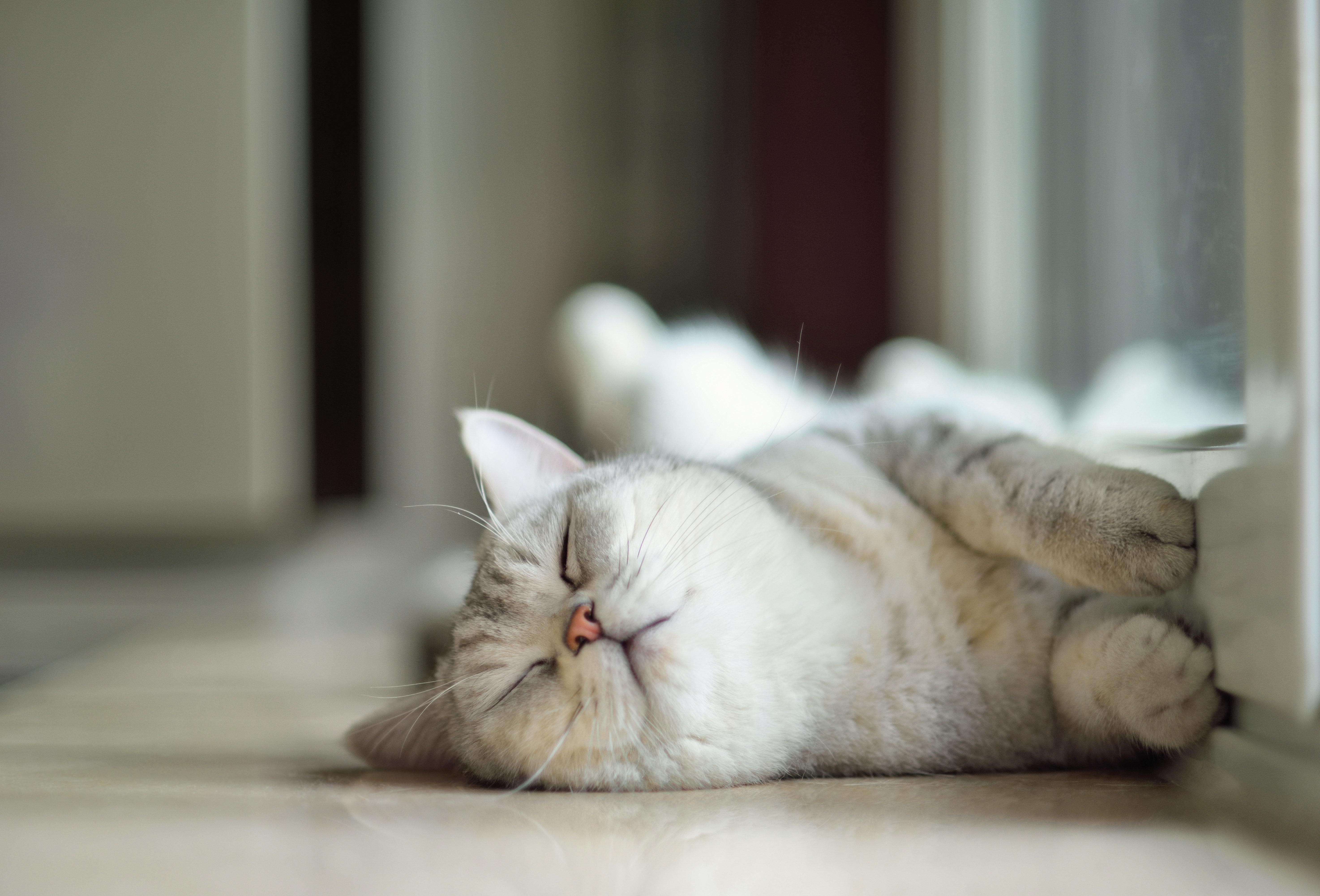 世界のニャンコが( ˘ω˘)スヤァ!!と眠る。猫のための子守唄「Lullaby For A