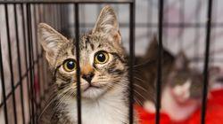 保護施設の動物を「州公認のペット」にする法案が、オハイオ州で可決