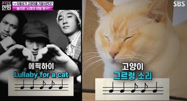 에픽하이 '고양이 자장가'가 고양이에게 먹히는 과학적 이유가
