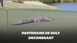 Aux États-Unis, cet alligator interrompt une partie de