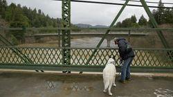 Σκωτία: Η μυστηριώδης γέφυρα από την οποία σκοτώνονται μαζικά οι