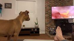 On sait enfin pourquoi des chiens pleurent devant