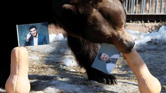 Buyan, a male Siberian brown bear, chooses a pumpkin with a photograph of candidate Petro Poroshenko while attempting to predict the winner of the Ukrainian presidential election, as a photo of candidate Volodymyr Zelenskiy is placed nearby, during an event at the Royev Ruchey Zoo in Krasnoyarsk, Russia March 28, 2019. REUTERS/Ilya Naymushin