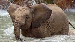 ΗΠΑ: Δύο νεαροί ελέφαντες πέθαναν σε λίγες μέρες σε ζωολογικό