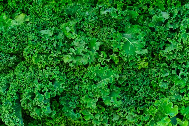 Nearly 60 percent of kale tested in a recent study had pesticide