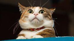 의료비 보장 장기 고양이보험이 최초로