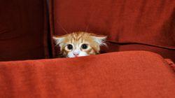 ΗΠΑ: Πονηρό γατάκι βρίσκει την τέλεια