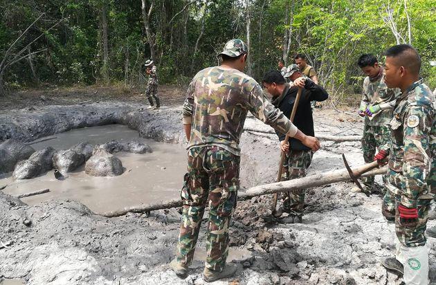 En Thaïlande, des bébés éléphants secourus par des gardes