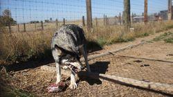 Ισπανία: Οργή για το ζωολογικό κήπο της