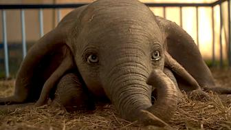 Dumbo topped the box office in its opening week.