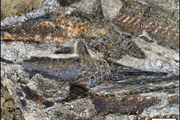 Η μέρα που εξαφανίστηκαν οι δεινόσαυροι: Αποκαλυπτικά