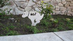 La consecuencia de no recoger las cacas de los perros que nunca te habías