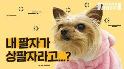 [외스트월드]'개팔자가 상팔자?' 나라별 반려동물 문화와 동물권