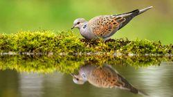 La Ligue de Protection des Oiseaux porte plainte contre la France devant