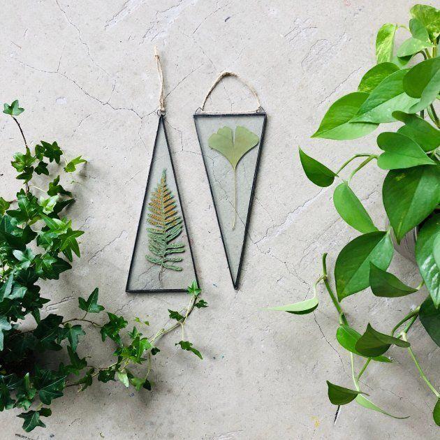 Cadre de plantes