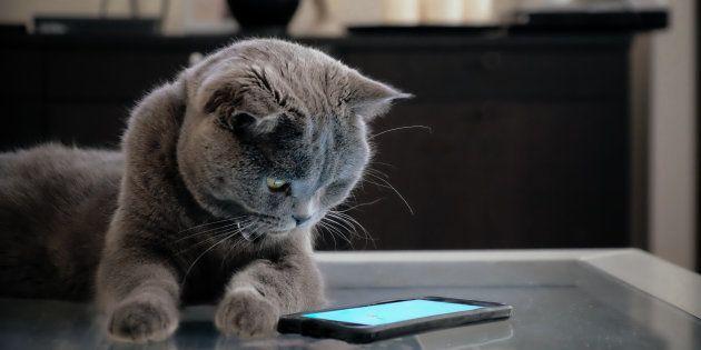Face aux baisses des ventes de smartphones, les fabricants comptent sur vos compagnons à quatre pattes...