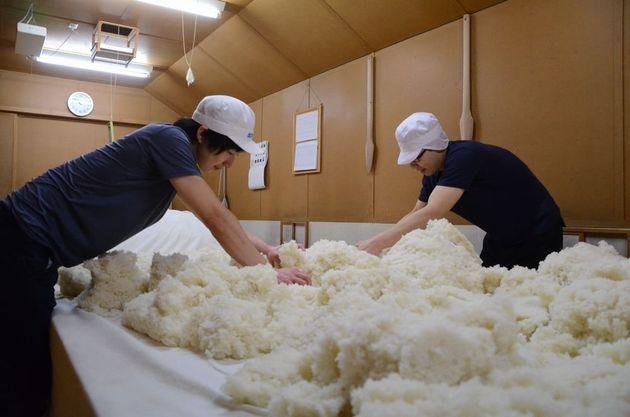 平成最後の祝い酒を、美智子さまにイギリスが献上したバラから作りたい。東京農大の卒業生らが計画中