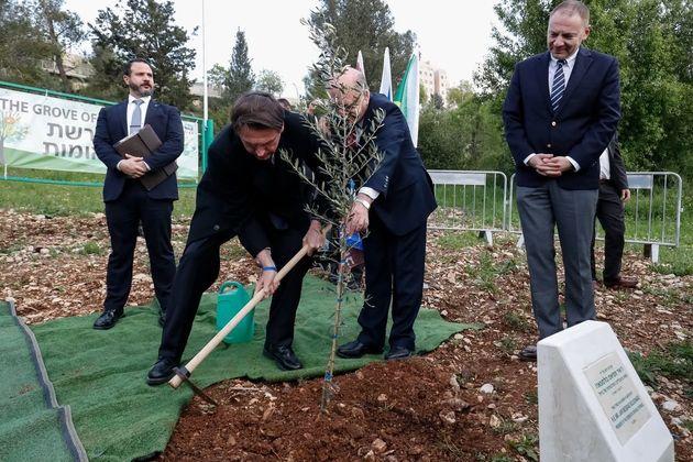 Bolsonaro planta muda de oliveira em