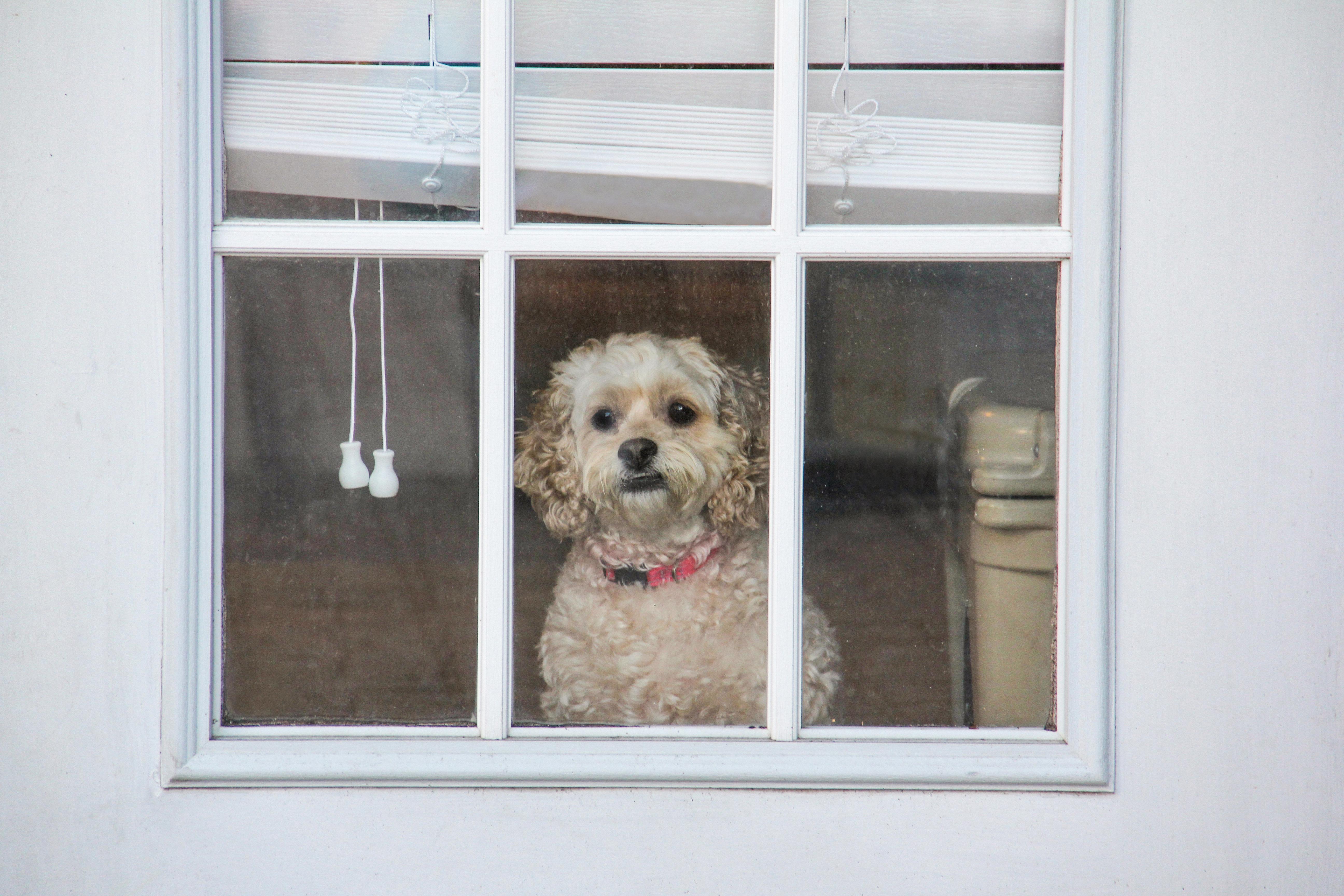 Estes cuidados vão deixar seu cachorro feliz e seguro quando estiver