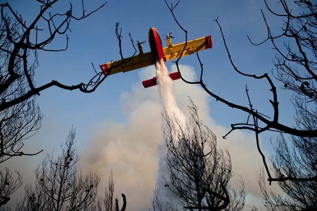 Δάσος Στροφυλιάς: Κάηκαν 1.500 στρέμματα σπάνιου