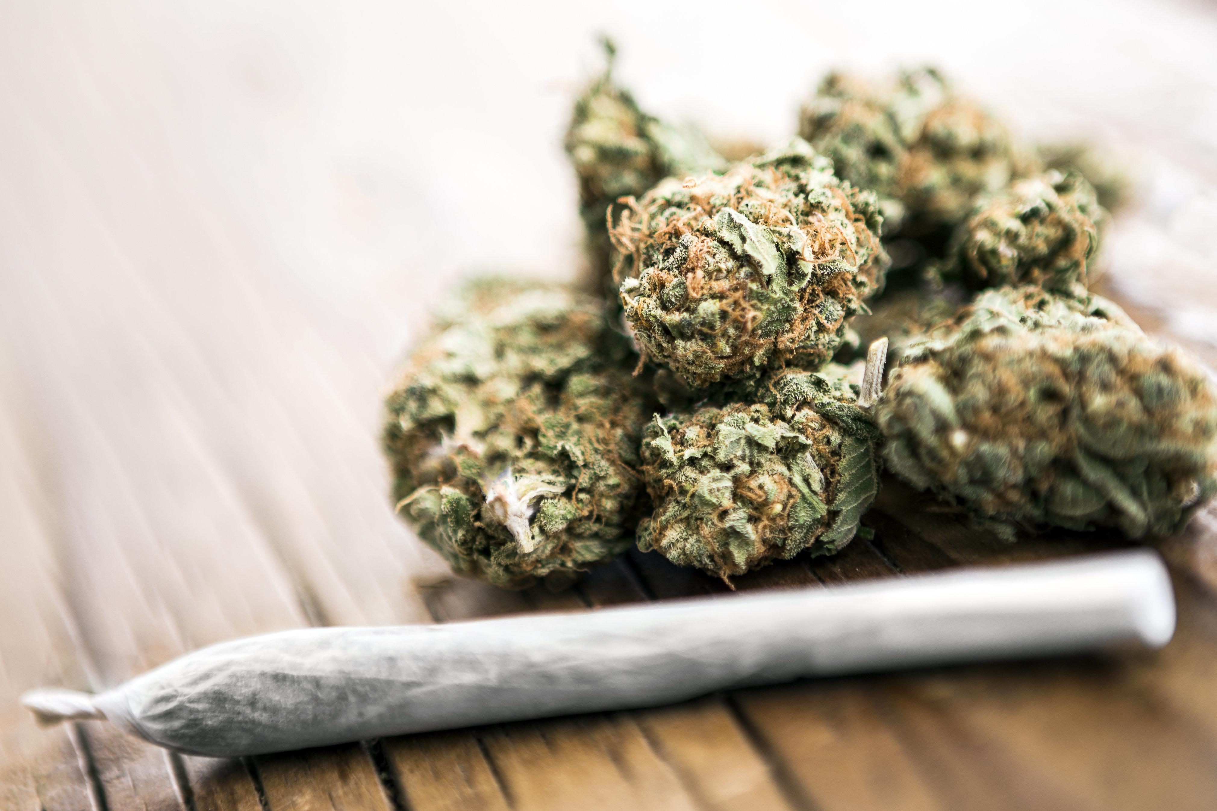 75% du cannabis vendu à Madrid contient de la matière