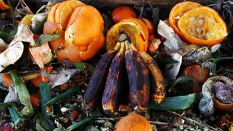 Rotten, old fruit and vegetables. Fruit and vegetable waste on compost