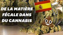 De la matière fécale retrouvée dans 75% du cannabis vendu à