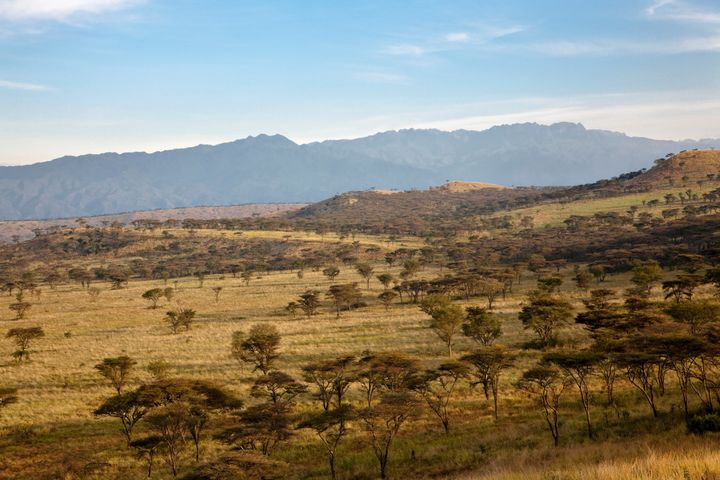 A 35-year-old American woman and her driver have been kidnapped inside Uganda's Queen Elizabeth National Park after her vehic
