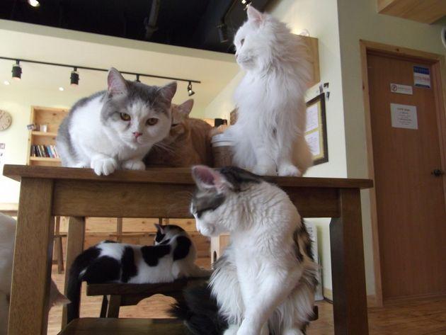 가정에서 여러 마리를 기르는 고양이는 제 이름을 알아들었지만 고양이 카페 고양이는 그렇지