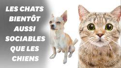 Les chats connaissent bien leur nom et ce n'est pas si évident que