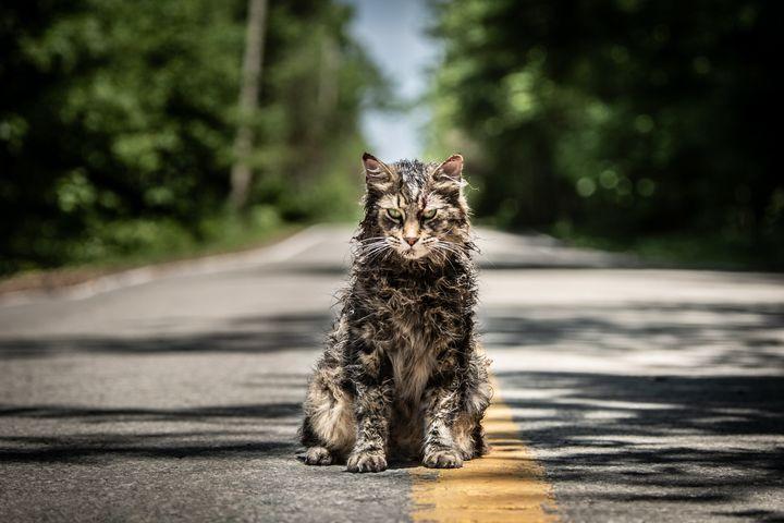 """Church the cat in """"Pet Sematary."""""""