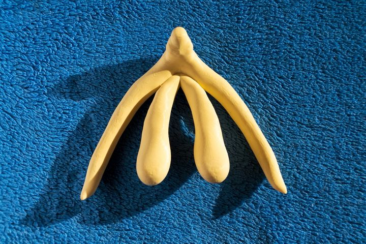 "The clitoris, depicted in full above, is more than just the small bean or ""glans clitoris"" most are familiar with."