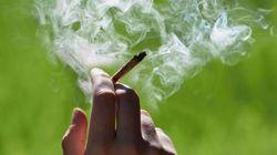 미국 뉴멕시코주가 마리화나 소유를