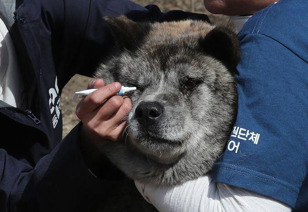 5일 오후 강원도 고성군 토성면 인흥리에서 동물권보호단체 케어 회원들이 화재로 인해 부상을 입은 동물들을 치료하고