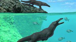 Une baleine préhistorique à quatre pattes découverte au