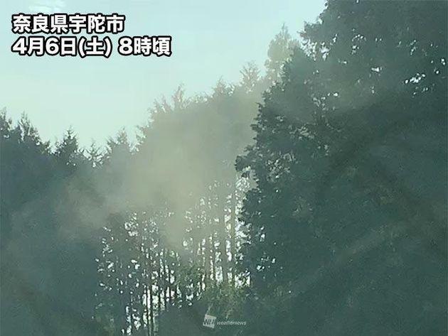 奈良県からは「ヒノキ花粉が煙のように飛んでいます」との投稿も