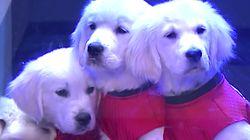 Adorable Puppies Help Jimmy Fallon Predict NCAA
