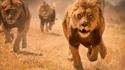 Un homme soupçonné de braconnage tué par un éléphant et mangé par des