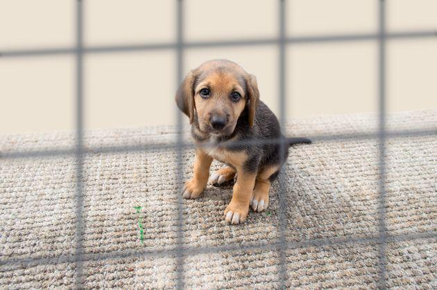 30 millions d'amis dénonce la vente de 200 chiens à un