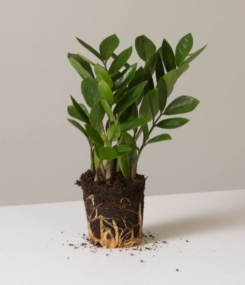 12 Indoor Plants That Help Clean The Air And Remove Toxins