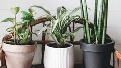 NASA-Approved Indoor Plants That Help Clean The Air And Remove