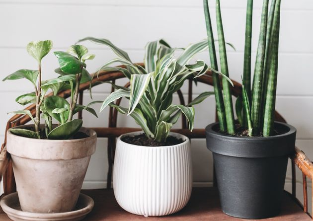 12 Indoor Plants That Help Clean The Air And Remove