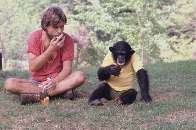 말하는 침팬지 '님 침스키'의 삶을 다룬 다큐멘터리 영화 '프로젝트