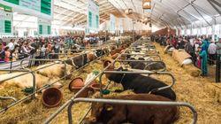 À l'honneur du SIAM 2019, la Suisse met son expertise au service de l'agriculture